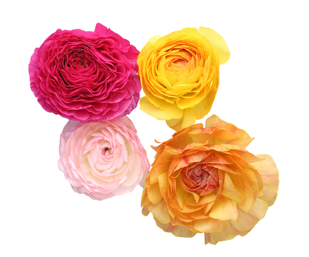 buttercup: Bouquet of Persian buttercup