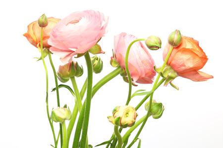 persian: Bouquet of Persian buttercup