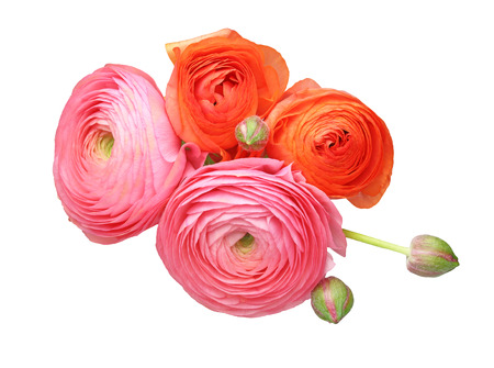 persian buttercup: Bouquet of Persian buttercup
