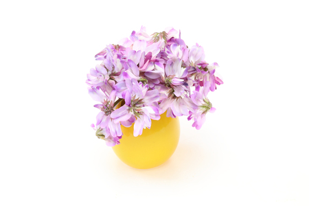 vetch: Bouquet of chinese milk vetch in a vase