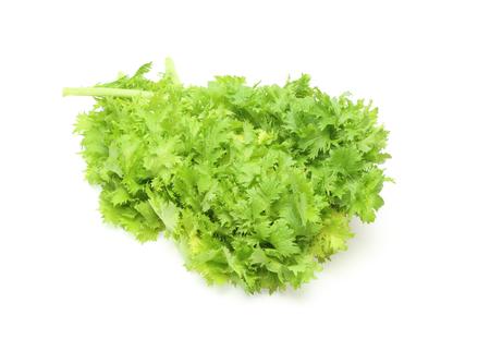 wasabi: Wasabi greens Stock Photo