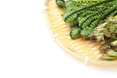 aralia: Aralia Sprout and Ostrich fern on a bamboo colander