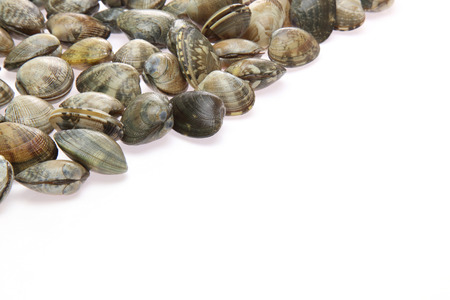 clams: Clams in a white background Stock Photo
