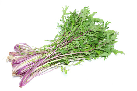 potherb: Potherb mustard in a white background Stock Photo