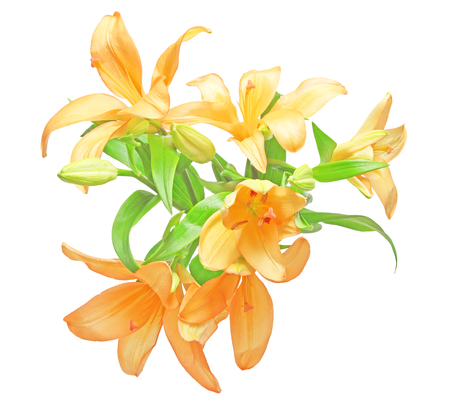 Bouquet of lily Stock Photo