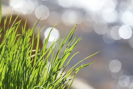 Wild grass with diffuse reflection