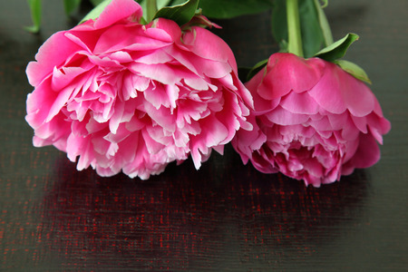 Peony in a wooden background