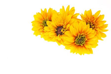 Flower head of Rudbeckia