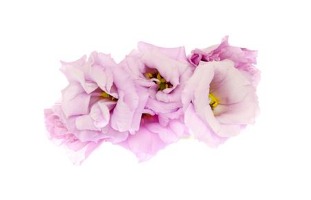 トルコギキョウの花頭