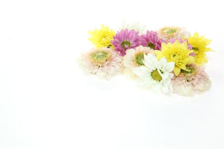 白い背景に菊の花の頭