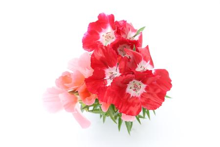 satin flowers in a white background Standard-Bild