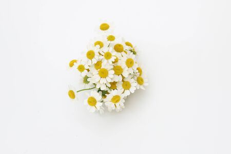 bouquet of Feverfew in a white background