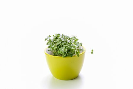 the broccoli sprout in the green bowl