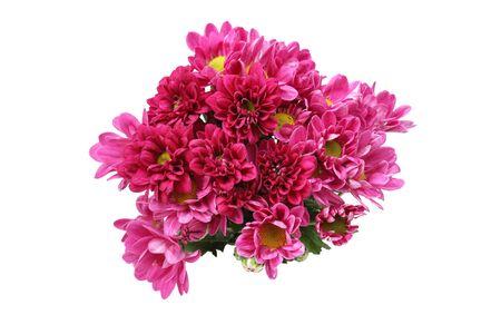 bouquet de chrysanthème dans un fond blanc