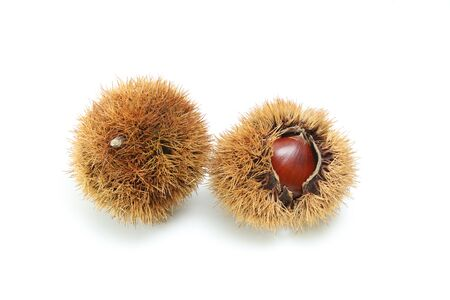 Japanese Chestnuts in a white background