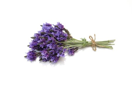 lavenders in a white background Stockfoto