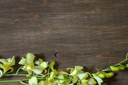 Cooktown Orchid in a wooden background