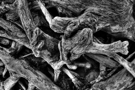shore line: Black and white image of driftwood with all the rough detail
