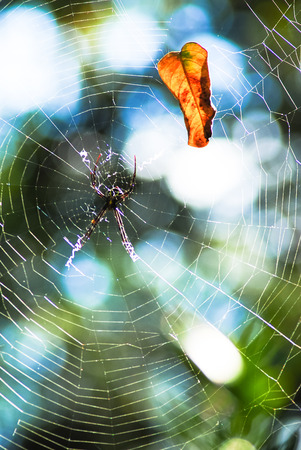 s trap: web of spider,Spider web  is typically used to refer to a web that is apparently still in use