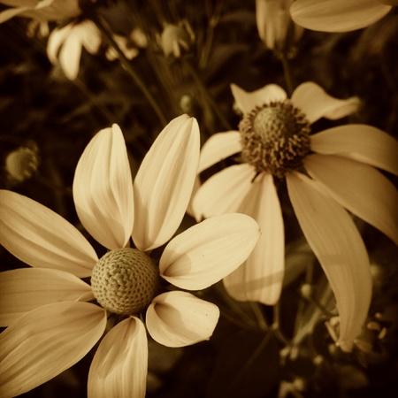 grunge: Yellow flowers