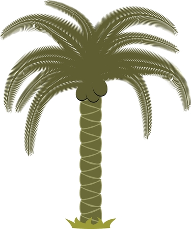 palm in vector format Ilustracja