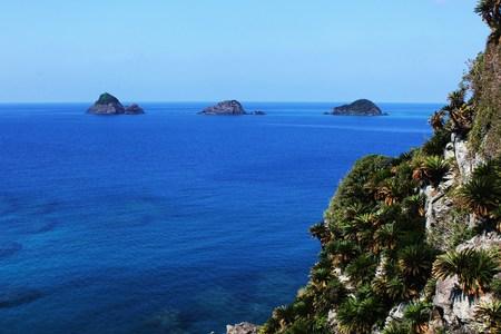 cycad: Cycad and sea