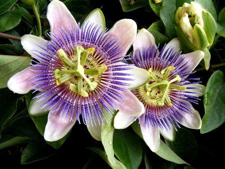 flores exoticas: dos flores ex�ticas cerca