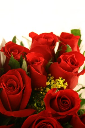 closeup of red roses with copy space Stock Photo