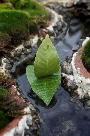 sailer: boat of leaves sailing in mini river