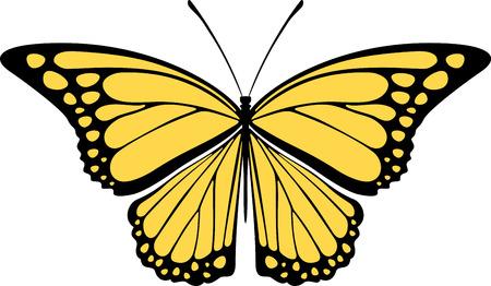 白い背景上に分離されて蝶のデザイン  イラスト・ベクター素材