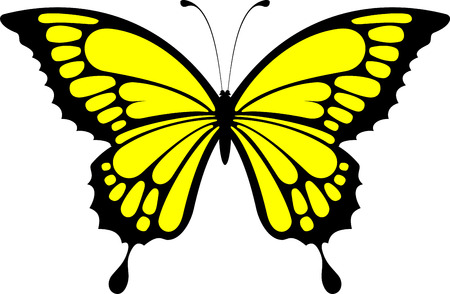 butterfly design isolated on white background