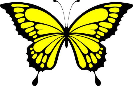 tatouage papillon: conception de papillon isol�e sur fond blanc