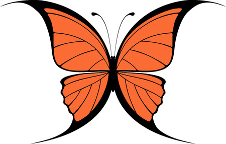 butterfly isolated: butterfly design