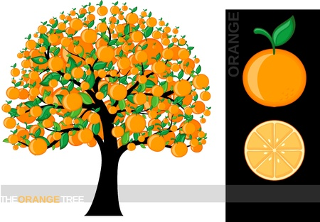 Illustration of a cartoon orange tree isolated on white background, very useful for several concepts (font used is a