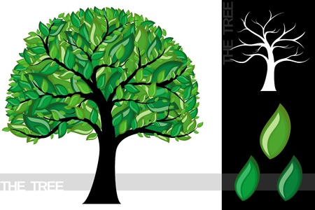 Illustration of a cartoon tree isolated on white background, very useful for several concepts