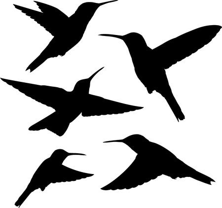 hummingbird: set of five detailed black hummingbird silhouettes isolated on white