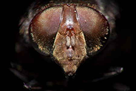extreme close up front view of fly head