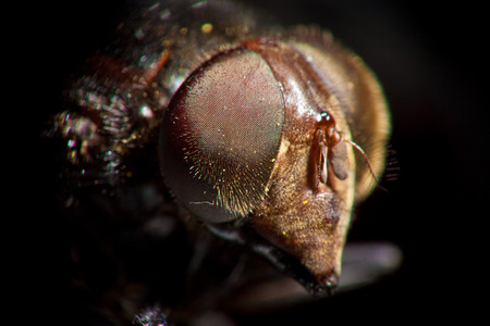extreme close up of big fly head