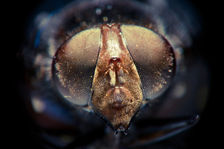 front view: extreme close up front view of fly head