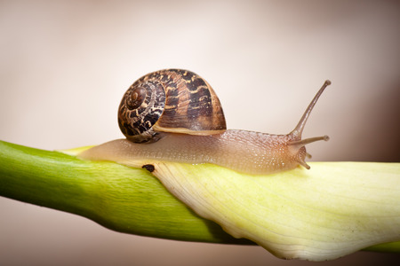 close up of a garden snail crawling on plant