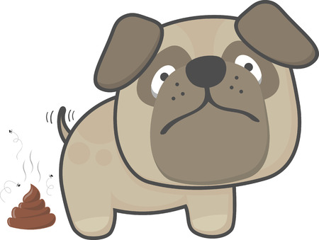 cute pug dog pooping isolated on white background