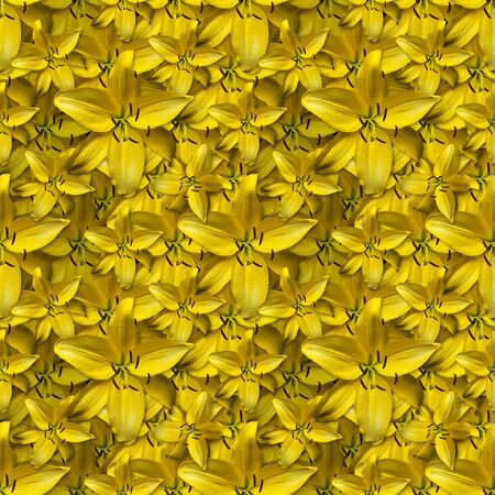 repeating seamless pattern of yellow flowers. Daylily Hemerocallis 'Hyperion'. Can be tiled 版權商用圖片