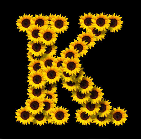 Capital letter K made of yellow sunflowers flowers isolated on black background. Design element for love concepts designs. Ideal for mothers day and spring themes