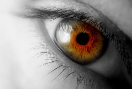 close up eyes: Brown eye