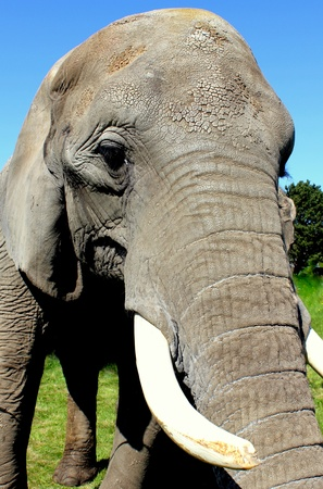 Elephant Stock Photo - 11475711
