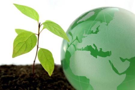 Green world photo