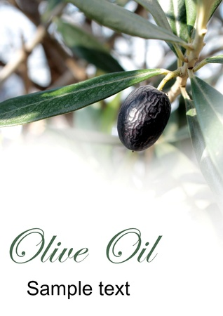 Olive and sample text