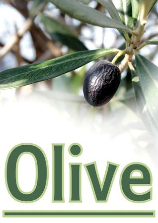 sample text: Oliva y texto de ejemplo Foto de archivo