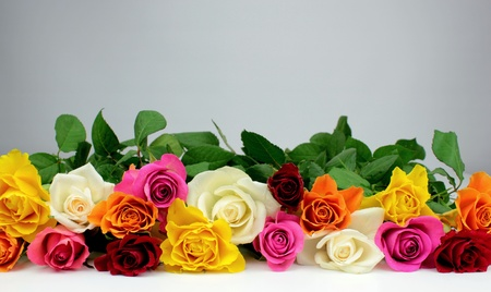Colorful roses Stock Photo - 13012579