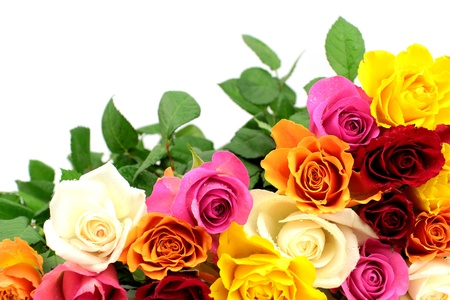 Colorful roses on white background photo